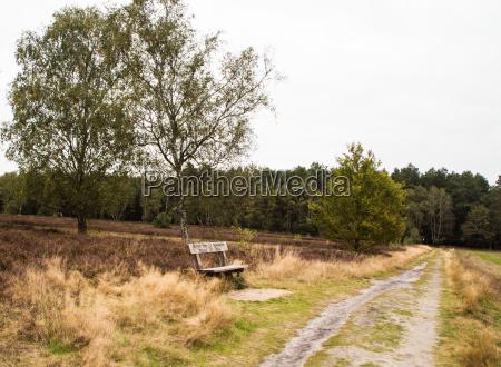 heathland in mueden at the oertze