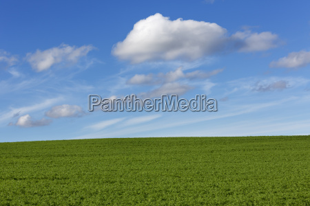 meadow with blue cloudy sky
