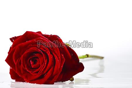 in, love - 10162447