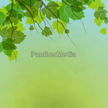 fresh, green, leaves, on, natural, background. - 10163601