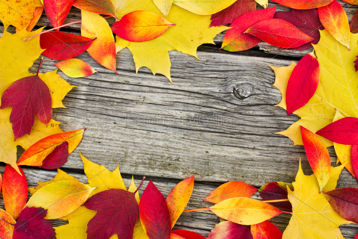 leaves, autumn, wood, board, grey, orange - 10165119