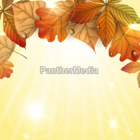 board, beautiful, beauteously, nice, leaf, art - 10168921