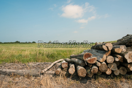pile of wood