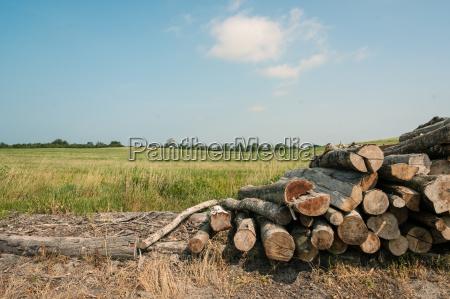 ambiente arvore industria madeira solo marrom