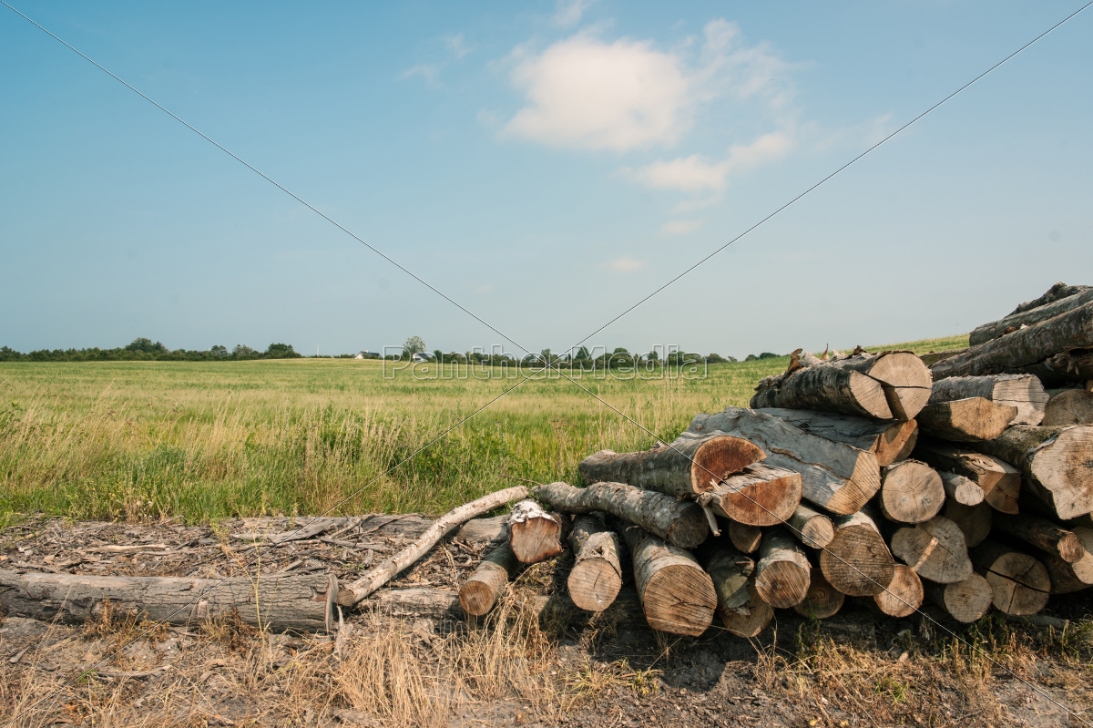 pile, of, wood - 10179401