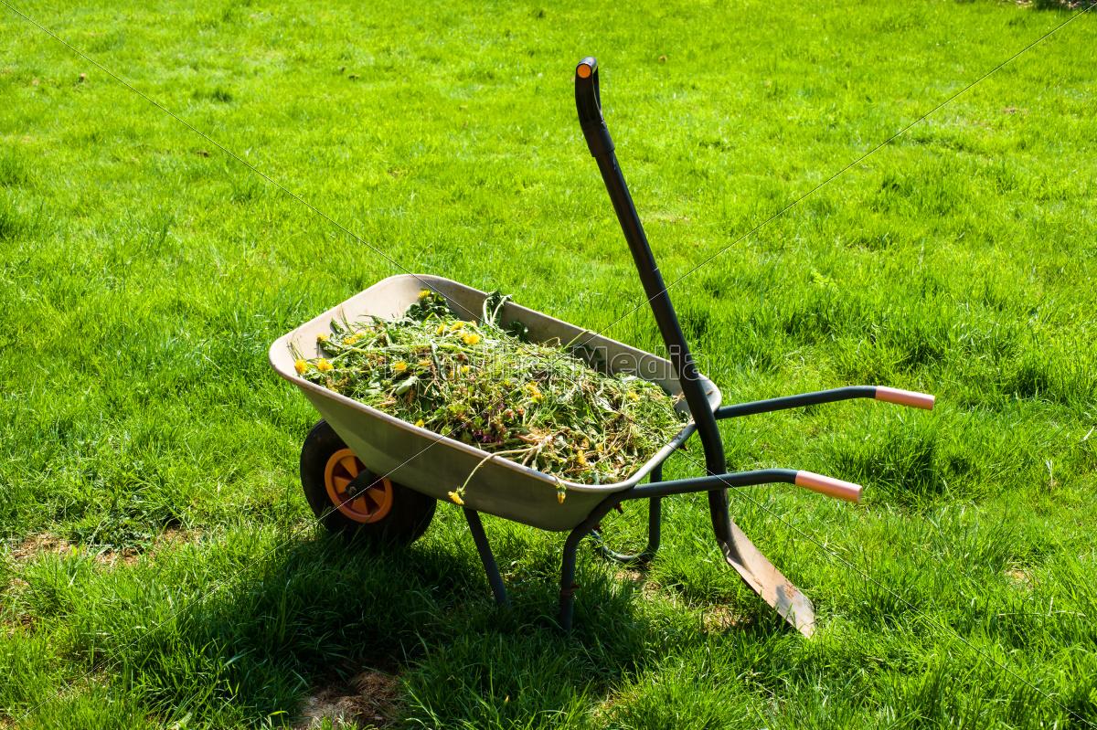 wheelbarrow, on, lawn - 10179263