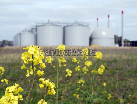 biogas plant with rape in the
