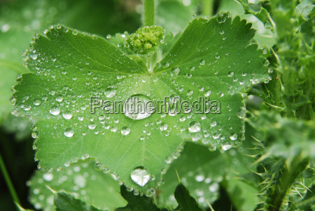 water drops after a rain on