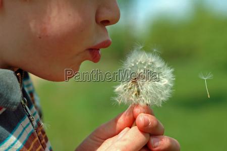 a boy blows into a dandelion