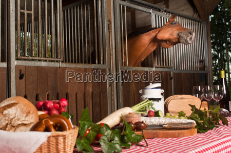 flehmendes horse in the stable