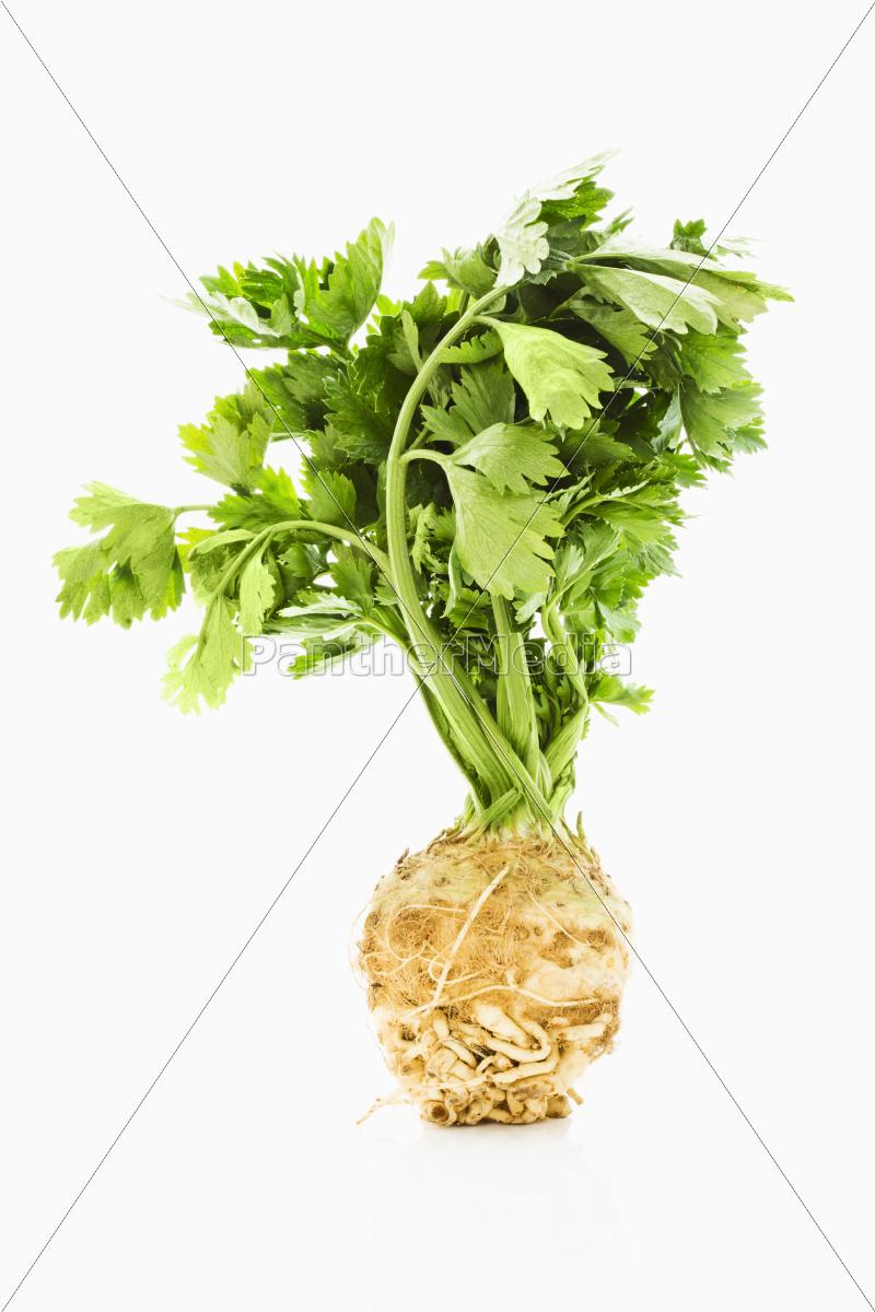 celery - 10197087