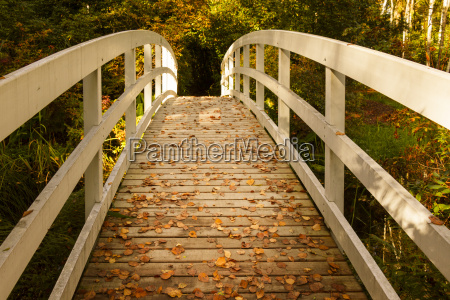 beautiful, beauteously, nice, leaf, environment, enviroment - 10198471
