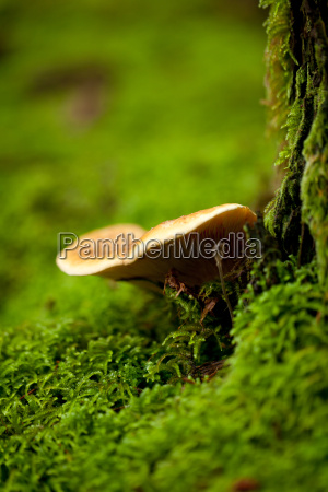 brown white mushrooms in moss forest