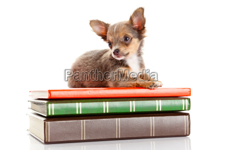 study, teacher, sweet, isolated, research, animal - 10220701