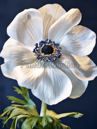 anemone on metal
