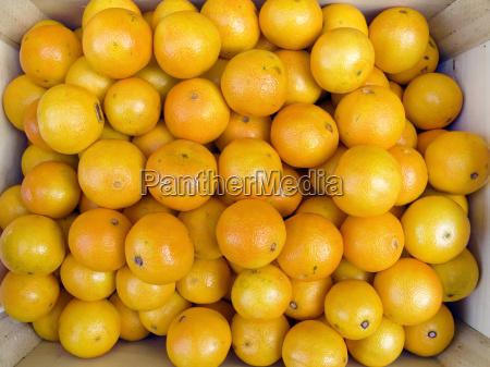 tangerines in box