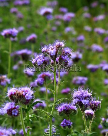 flower plant agriculture farming field purple