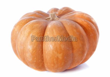 pumpkin - 10298651