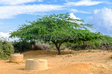 desert wells