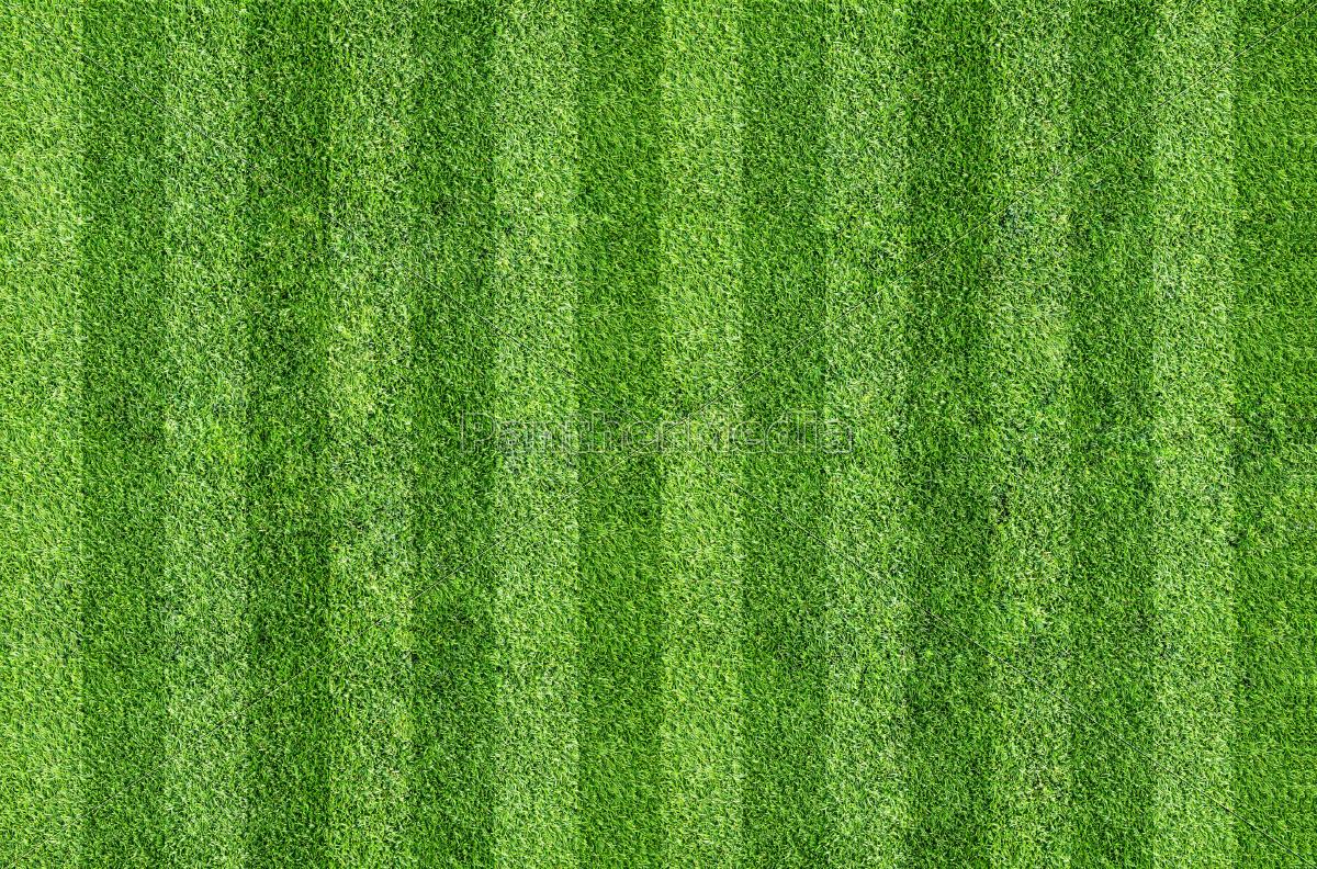 grass - 10308149