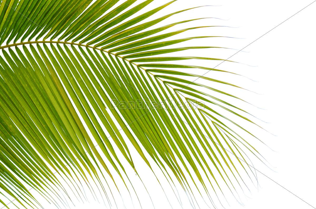 palm, leaf - 10308109