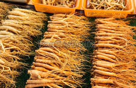 fresh, ginseng, stick, for, sell - 10310569