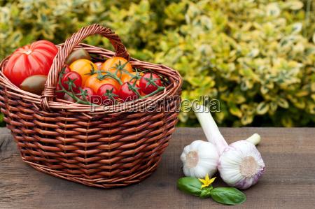 tomato, harvesting - 10323563