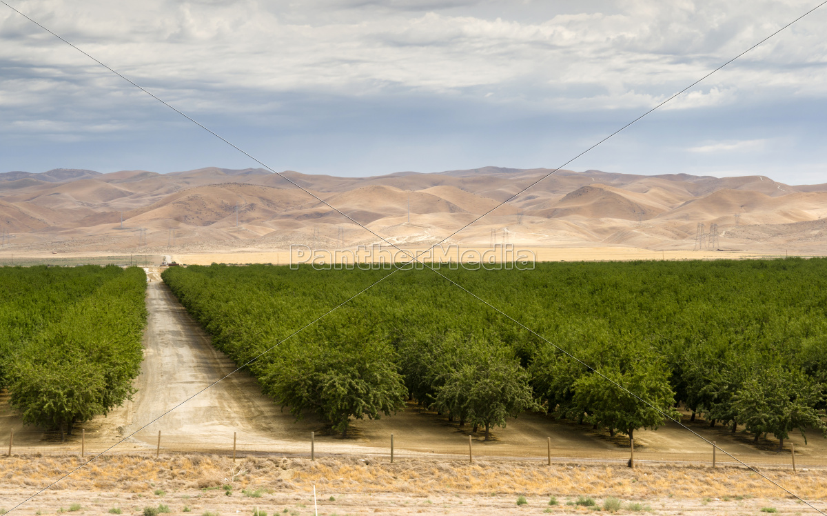 lush, green, orchard, farm, land, agriculture - 10327455