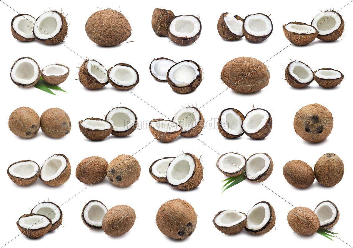 coconuts - 10330541