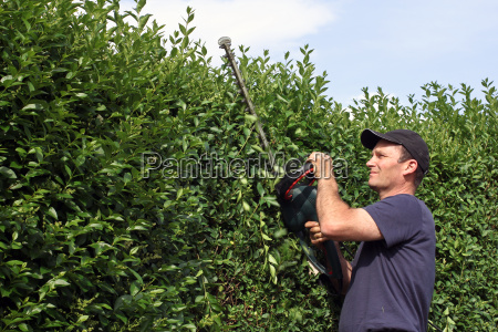 cut man with hedge trimmer hedge