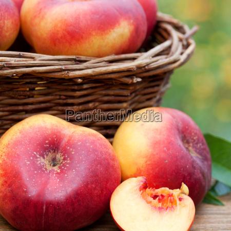 freshly, harvested, bergnektarinen - 10410015