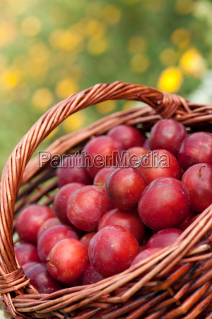 red mirabelle