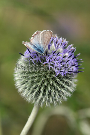 visit the thistle