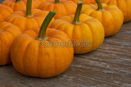 vegetables pumpkin pumpkins autumn fall harvest