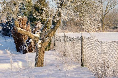 garden in winter garden in