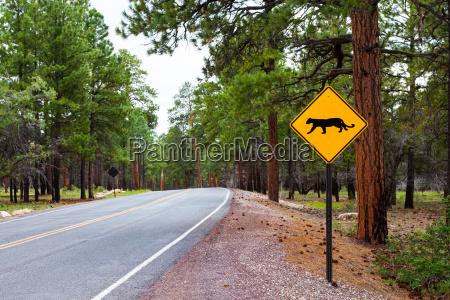 grand canyon road