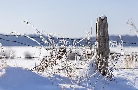 frosty winter fence