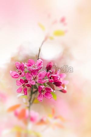 gentle blossom background