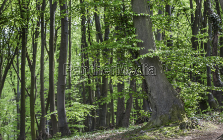 the big tree in the forest