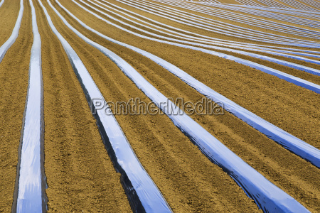 lines of agriculture