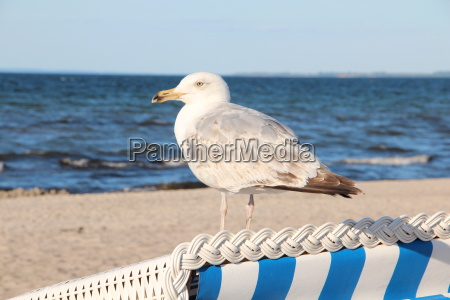 on the baltic sea beach