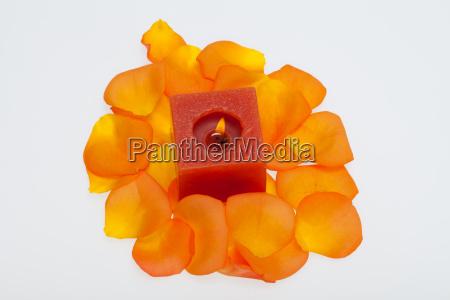 spilt petals of the orange rose