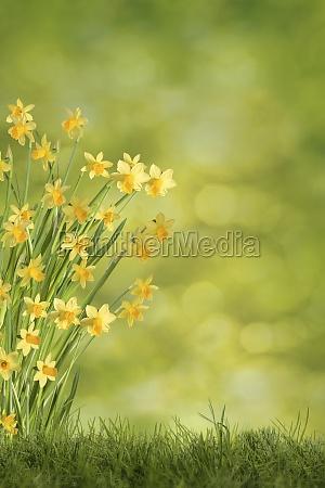 easter bells on green meadow