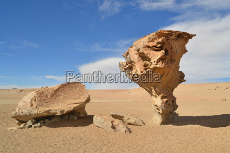 stone tree rock formation in the