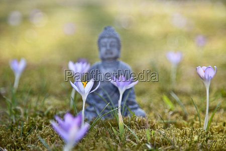 buddha meditation in spring