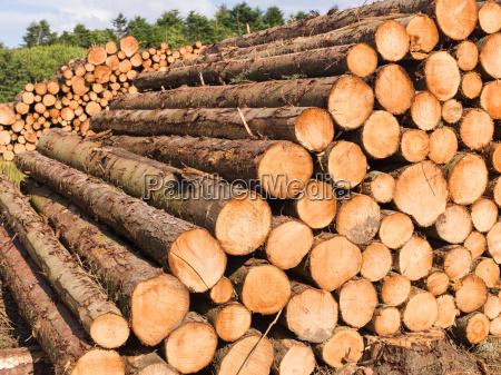 pile logs on the forest