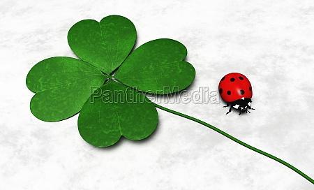four leaf clover and a ladybug