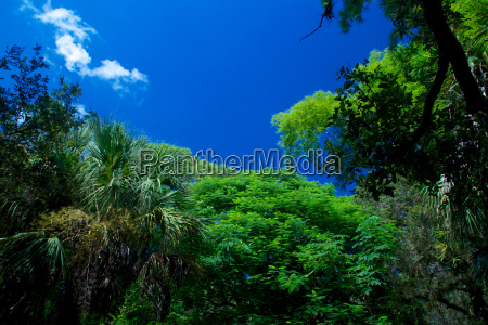 sky above tropical forest