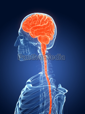 3d rendered medical illustration female