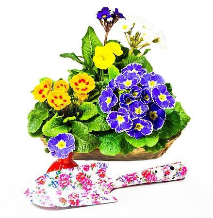 flowers and garden shovel